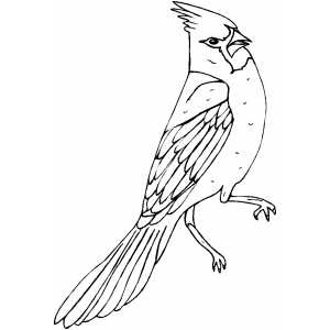 Angry Cardinal Coloring Page