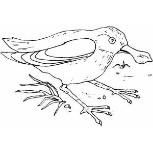 Bird With Funny Beak coloring page