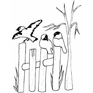 Birds On Fence coloring page