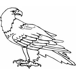 Calm Eagle coloring page