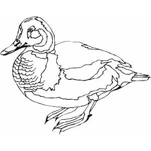 Colored Duck coloring page