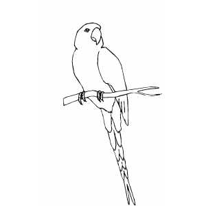Conure On Branch coloring page