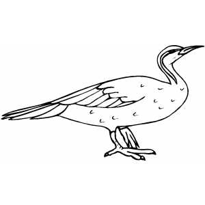 Gloomy Bird coloring page