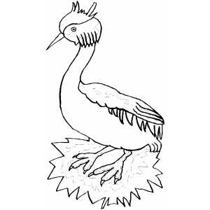 Grebe coloring page