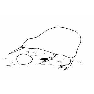 Kiwi Bird With Egg Coloring Page