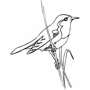 Little Bird On Stalk coloring page