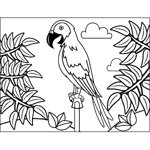 Parrot Perch coloring page