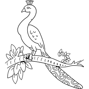 Peacock on Branch coloring page