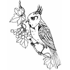 Perched Bird With Berries coloring page