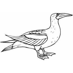 Proud Bird coloring page