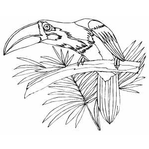Sad Parrot On Branch coloring page