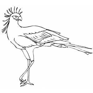Secretary Bird On One Leg coloring page