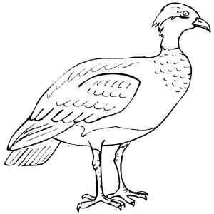 Severe Bird coloring page