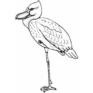 Shoe Bill coloring page