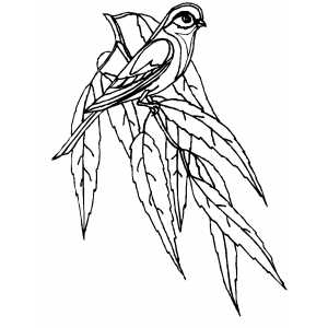 Small Perched Bird coloring page