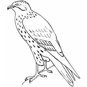 Standing Falcon coloring page