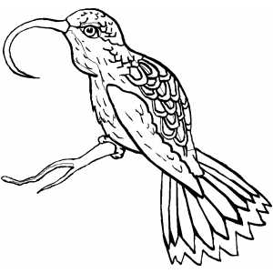 Sunbird coloring page