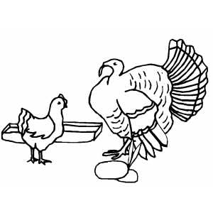 Turkey And Chicken coloring page