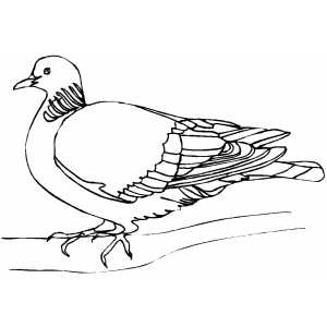 Woodpigeon coloring page