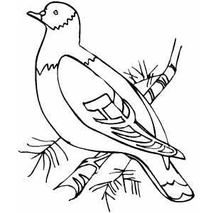 Woodpigeon On Tree coloring page