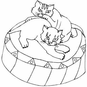 Kittens Playing coloring page