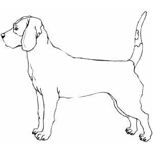 Bloodhound coloring page
