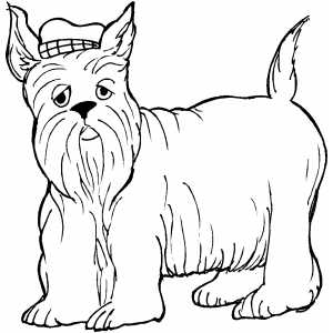 Scottie With Hat coloring page