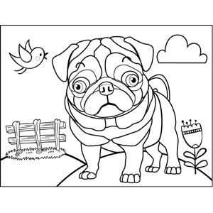 Surprised Pug coloring page