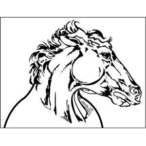 Horse Profile coloring page
