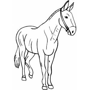 Walking Horse coloring page