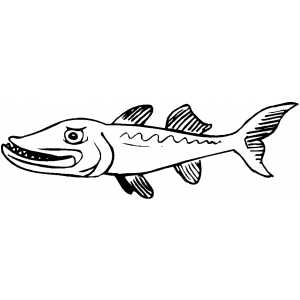 Angry Barracuda coloring page