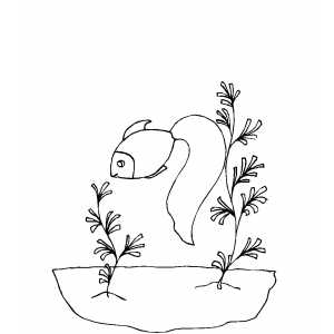 Gold Fish Smelling Seaweed coloring page