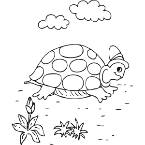 Turtle in Hat coloring page