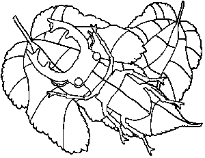 Beetle on Leaves coloring page