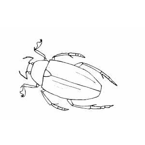 Big Crawling Insect coloring page