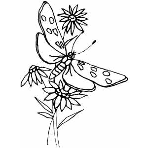 Butterfly Among The Flowers coloring page