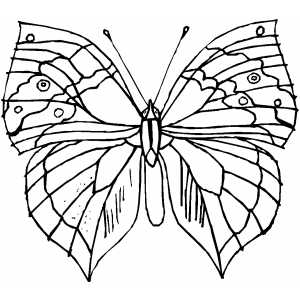 Butterfly With Strange Wings coloring page