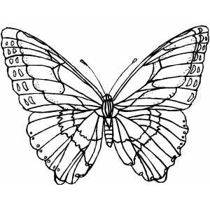 Butterfly With Wide Wings coloring page