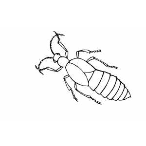 Crawling Insect coloring page