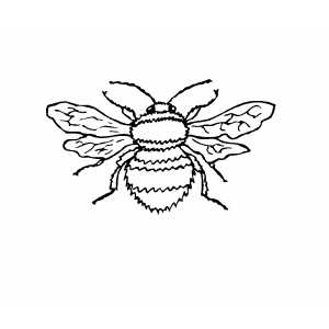 Flying Bee coloring page