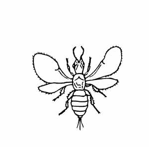 Flying Insect coloring page
