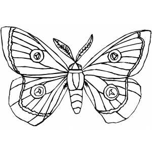 Moth coloring page