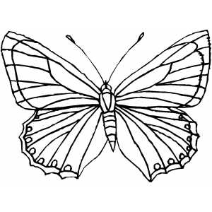 Nice Butterfly coloring page