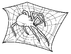 Spider on Web coloring page