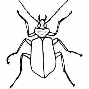 Thin Beetle coloring page