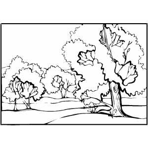 Trees By Stream coloring page