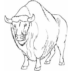 Angry Buffalo coloring page