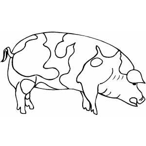 Fat Pig coloring page