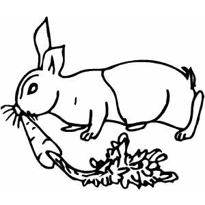 Rabbit With Carrot coloring page