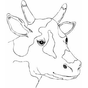 Spotty Cow Head coloring page